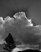 Crepuscular Rays Prints - Breaking Out Print by Sandra Bronstein