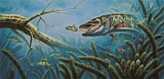Freshwater Prints - Breakline Hunter Musky Print by JQ Licensing