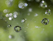 Water Drops Prints - Breakthrough Print by Rebecca Cozart