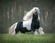Gypsy Stallion Posters - Breathtaking Stallion Poster by Terry Kirkland Cook