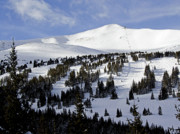 Mountaintop. Trees Prints - Breckenridge Imperial Bowl and Peak 8 Print by Brendan Reals