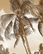 Tropical Photographs Photo Prints - Breeze Print by Athala Carole Bruckner