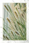 Reeds Digital Art Framed Prints - Breeze Framed Print by Holly Kempe