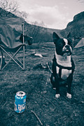 Camping Prints - BrewDog Bull Print by Justin Albrecht