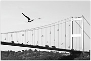 Flying Photos - Bridge And Seagull, Bosphorus, Istanbul, Turkey by Gulale