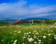 Bridge Of Flowers Prints - Bridge At Castlegregory, Dingle Print by The Irish Image Collection