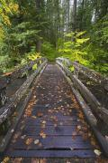 Hardwood Trees Posters - Bridge In A Park Poster by Craig Tuttle