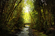 Pacific Northwest Rivers Framed Prints - Bridge in the Rainforest Framed Print by Carol Groenen
