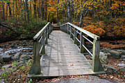 Golds Posters - Bridge Into Autumn Poster by Kay Novy