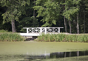 Algae Framed Prints - Bridge Over an Algae Covered Pond Framed Print by Jaak Nilson