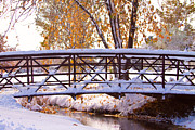 Snow Tree Prints Posters - Bridge Over Icy Waters Poster by James Bo Insogna