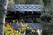 Riverscape - Early Autumn Prints - Bridge over the Pithlachascotee River Print by Theresa Willingham