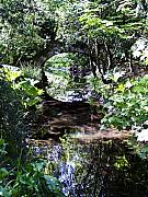 Overgrown Prints - Bridge Reflection at Blarney Caste Ireland Print by Teresa Mucha