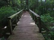 Woods Pyrography Prints - Bridge to fun Print by Karen Moulder