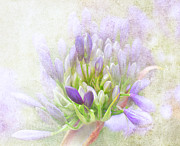 Flower Blooms Digital Art Prints - Bridging the Heavens Print by Jeff Burgess