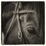 Monotone Prints - Bridled II Print by David Patterson