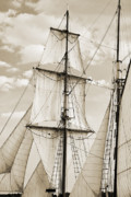 Sails Prints - Brigantine Tallship Fritha Sails and Rigging Print by Dustin K Ryan