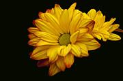 Byron Varvarigos - Bright And Brassy