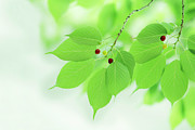 Close Focus Nature Scene Photo Posters - Bright Green Leaves Poster by Imagewerks