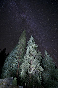 Conifers Prints - Bright Night Print by Jeff Kolker