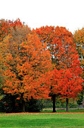 Michigan Fall Colors Posters - Bright Orange Poster by Scott Hovind