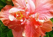Pink Hibiscus Posters - Bright Pink Hibiscus Poster by James Temple