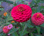 Padre Art Photos - Bright Red Zinnia Flower by Padre Art