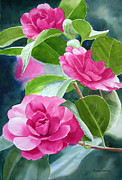 Camellia Posters - Bright Rose-Colored Camellias Poster by Sharon Freeman