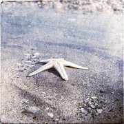 Bright Star Fish Beach Shore Sand Pebble Prints - Bright Star Print by Paul Grand