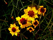Gold - Bright Wildflowers by Kimberly Gonzales