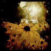 Joel Witmeyer - Brighten Up