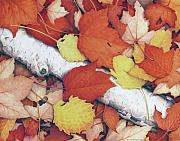 Fall Leaves Prints - Brilliant Embers Print by Amy S Turner
