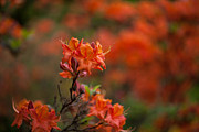 Arboretum Photos - Brilliantly Rouge by Mike Reid