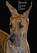 Brindle Framed Prints - Brindle Great Dane Framed Print by Larry Linton
