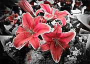 Stargazer Lily Prints - Bring Out The Pink Print by April Reppucci