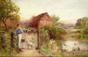Farm Painting Framed Prints - Bringing Home the Sheep Framed Print by Ernest Walbourn