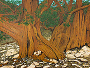 Oldest Living Tree Posters - Bristlecone pine Poster by L J Oakes