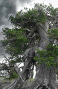 Alpine Photo Originals - Bristlecone Pine tree on the rim of Crater Lake - Oregon by Christine Till