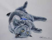 British Shorthair Art - British Shorthair by Olga Tereshchuk