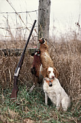 Rural Indiana Prints - Brittany and Pheasants - FS000757b Print by Daniel Dempster