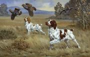 Canines Prints - Brittany Spaniels Flush Three Birds Print by Walter A. Weber