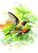 Hummingbird Pastels - Broadtailed Hummingbird by Janice Lawrence