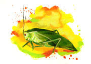 Insects Pastels - Broadwinged Katydid by Janice Lawrence