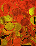 Tangerine Prints - Brocade Circles Print by Bonnie Bruno