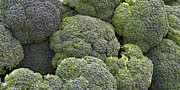 Broccoli Print by Forest Alan Lee