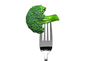 Broccoli Photo Prints - Broccoli on a fork isolated on white Print by Richard Thomas