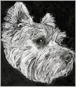 West Highland Drawings - Brodie the Westie  by Nicola  McLean
