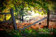 Autumn Landscape Digital Art Prints - Broken Fence in Sycamore Park Print by Carol Groenen