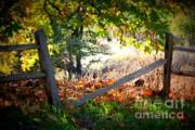 Broken Fence In Sycamore Park Print by Carol Groenen