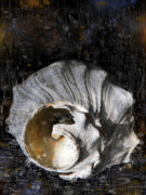 Sea Shell Drawings Prints - Broken Shell Print by Lola Bronzini